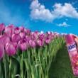 image af flower